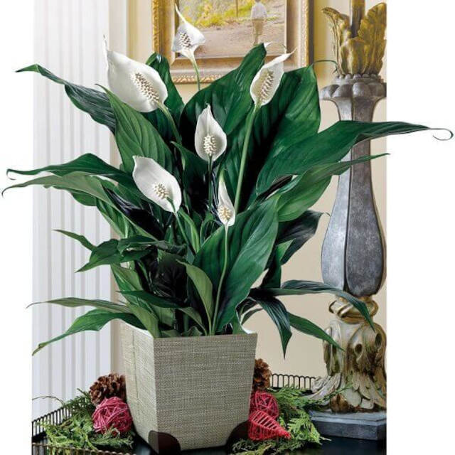 bromelias plantas para ambientes internos