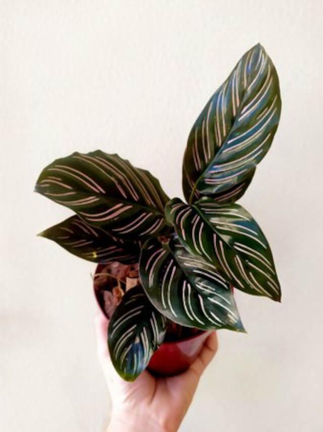 bromélias plantas para ambientes internos