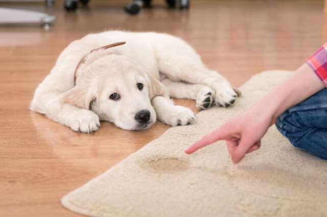 como limpar tapetes passo a passo