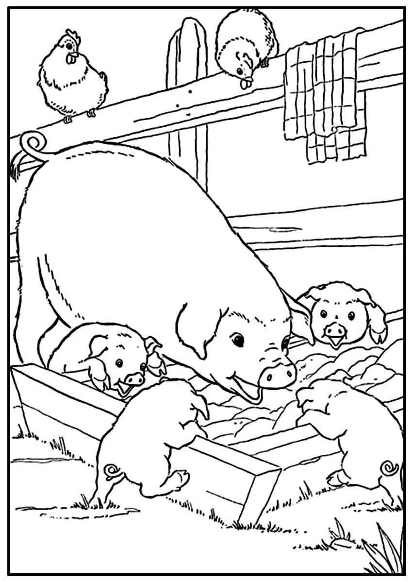 Página para colorir de Porquinhos