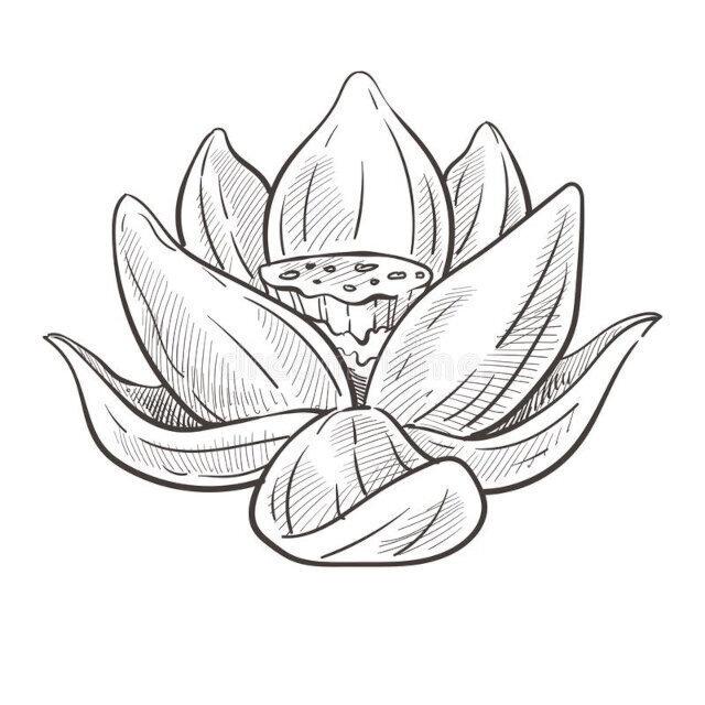 desenhos de flor para